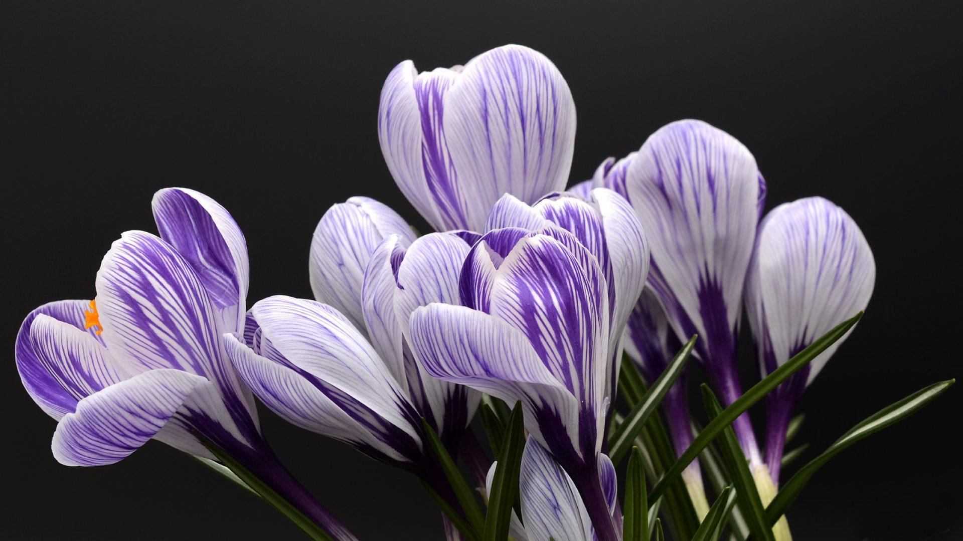 Enfasy Perfumarias